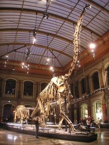 Erwartet junge Familien aus Heerstraße, der riesige Brachiosaurus