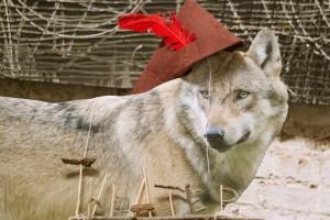 Canis lupus - Der Wolf_Foto Ruthe Zuntz