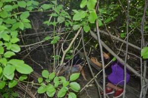 oder beim Testen für die Verstecktauglichkeit des Unterholzes
