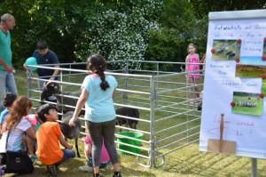 Tierisch gut kamen Schafe, Ziege und Hund vom hahneberg an